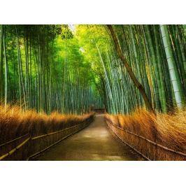 1Wall 1Wall fototapeta Bambusový les 315x232 cm