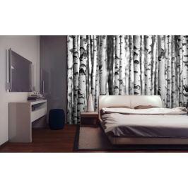 1Wall 1Wall fototapeta Černobílý březový les 315x232 cm
