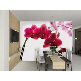 1Wall 1Wall fototapeta Orchidej 315x232 cm